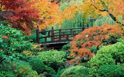 Фото садовых участков - фото