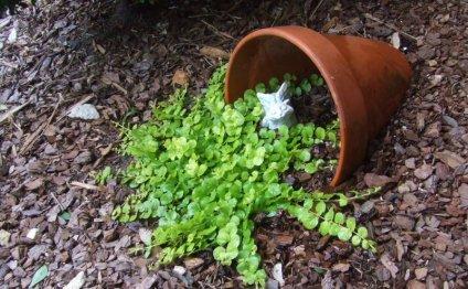 Garden art Садовые идеи и