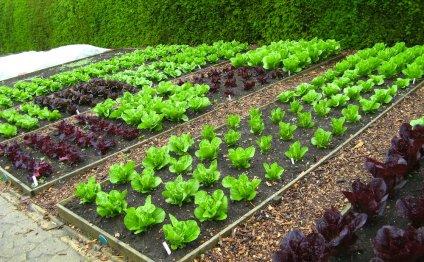Красивые сады и огороды фото