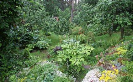 Мой любимый сад своими руками