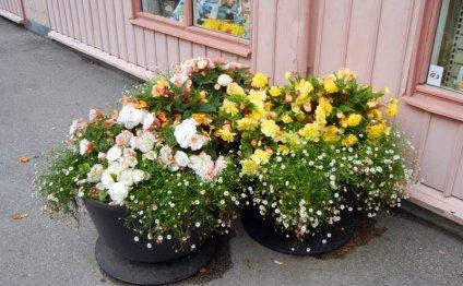 сандинавские клумбы для цветов