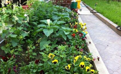 Какие цветы сажаем в августе 254